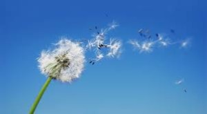 fiore volante